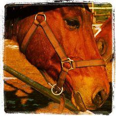 #horse #love #ride #eyes #big #bigeyes #fur #tenderness #sweet #puppy #cucciolo #sweet #heart #sweetheart #nose #brown #nature #novellaorchidea #novella #orchidea #raccontierotici #racconti #ebook
