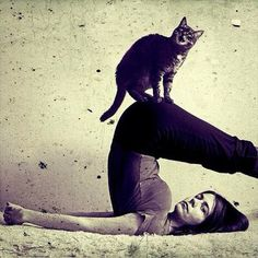 @Aja Yoga with your kitty. You know you want to try it!