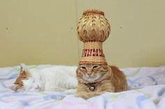 つぼ  I wonder if the photographer still laughs at how silly the cats are?