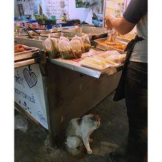 Bangkok cat is slowly  バンコク猫と夜  #KicoinThaiandBali2016June  #japanese #trip #travel #traveler #旅 #旅人 #旅行 #世界 #海外 #海外旅行 #world #travellover #funtime #タイ #バンコク #Bangkok #Thai #Thailand #beautiful  #kawaii #かわいい #cat #猫 #猫部