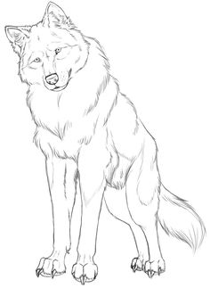 Animal Sketches, Animal Drawings, Cool Drawings, Drawing Sketches, Pencil Drawings, Drawing Ideas, Wolf Sketch, Anime Wolf, Anime Furry