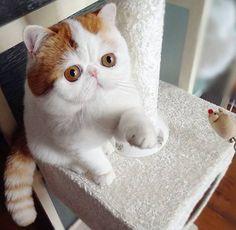 Cutenesst cat