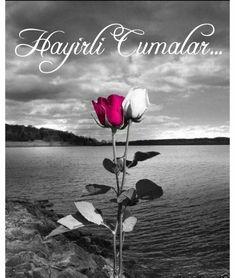 Lake Rose color splash ~ By Ladee Pink . ॐ ♥ ▾ ๑♡ஜ ℓv ஜ ᘡղlvbᘡ༺✿ ☾♡ ♥ ♫ La-la-la Bonne vie ♪ ❥ Color Splash, Color Pop, Splash Photography, Color Photography, Black And White Photography, Beautiful Rose Flowers, Rose Wallpaper, Splish Splash, White Picture