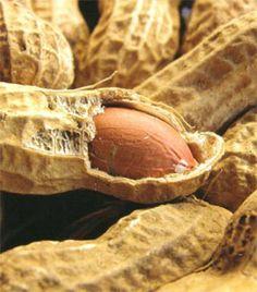 Maní / cacahuate