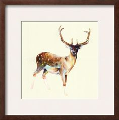 Deer wearing gym socks , Posters and Prints at Art.com