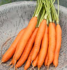 Carrot Romance Heat Toleerant D3116A (Orange) 500 Hybrid Seeds by David's Garden Seeds  http://www.amazon.com/dp/B00KL9FIRA/ref=cm_sw_r_pi_dp_JKqexb10NGXR0