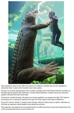 Australia's new Crocosaurus Cove park in Darwin allows thrill-seekers to swim face-to-face with massive saltwater crocodiles. There are saltwater crocodiles? Australia Map, Darwin Australia, Aussie Australia, Australia Funny, Visit Australia, Sydney Australia, Oh The Places You'll Go, Places To Travel, Places To Visit