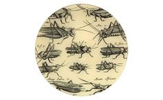 Locuftoe Insect Plate - Tabletop - Accessories | Jayson Home