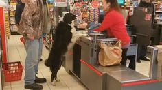 Dog picks out and pays for his own treats at the store - more at superhuggable.com