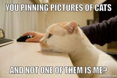 Hah! Wonder if my kitty feels this way.