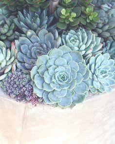 Succulent Container- Succulent Photograph