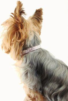 56 Best Dog Grooming Kit Images Grooming Kit Cubs Doggies