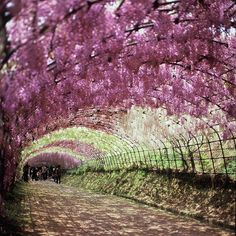 Wisteria tunnel by Shoichi Yamakawa, via 500px