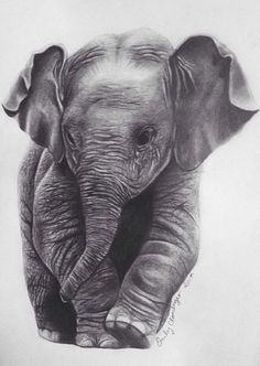 Pencil Drawing Tutorials Elephant Pencil Print - This is an inch print from an original hand drawn pencil portrait of a baby elephant. It's a great gift for any elephant lover! Baby Elephant Drawing, Elephant Sketch, Elephant Love, Elephant Art, Elephant Tattoos, African Elephant, Elephant Drawings, Geometric Elephant, Elefante Tattoo
