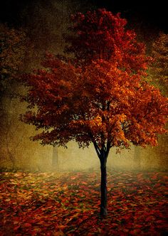 Autumn splender.....makes me think of you.