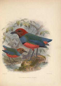 vol. 2 - Ornithological miscellany / - Biodiversity Heritage Library