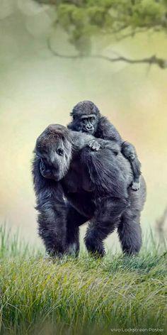 Animals Kissing, Baby Animals, Funny Animals, Cute Animals, Wild Animals, Tiger Species, Safari, Animals Amazing, Mundo Animal