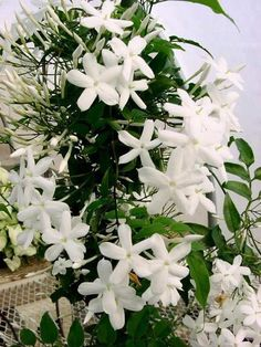 I love the smell of jasmin in a garden!