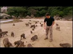 On the last leg of our tour through Japan's amazing wildlife, we find ourselves on an island beach. Overcome The World, Island Beach, Geography, Wilderness, Bbc, Monkey, Earth, Japan, Pets