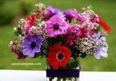 The bold and the beautiful. Bold And The Beautiful, Beautiful Flowers, Flower Arrangements, Floral Wreath, Anemones, Wreaths, Purple, Plants, Hair