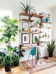 Plants + a cool gallery wall liven up an office space