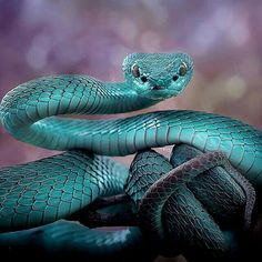 Pretty Snakes, Beautiful Snakes, Animals Beautiful, Cute Animals, Beautiful Birds, Funny Animals, Cute Reptiles, Reptiles And Amphibians, Mammals