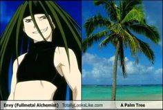 OMG!!!! Envy is a palm tree!!!!