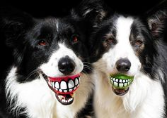 Rogz Grinz Smiling Dog Ball Toy 0