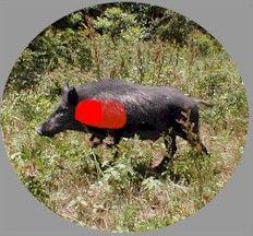 WILD HOG HUNTING THE ELUSIVE WILD BOAR HUNTING WILD HOGS TEXAS FERAL PIGS HUNTING RUSSIAN BOAR