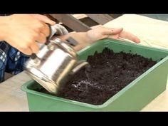 Все о выращивании капусты. Посев капусты на рассаду.Часть 2 - YouTube