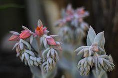 Orange Flower Buds Close Up by Mark de Scande on 500px