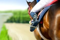 Four horses died in just six racing days (ten calendar days) at New Orleans Fairgrounds Race Course. This cruel sport needs to be banned. New Orleans Fairgrounds, May Events, Horse Betting, Horse Riding Boots, Four Horses, Horse Racing Tips, Sports Picks, Horse Gear, Thoroughbred Horse