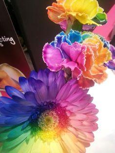 Rainbow flowers # Aalsmeer