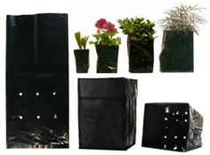These durable bags are a low-cost alternative to plastic pots and are made from a specially formulated plastic that provides for a longer life than any other bag on the market. Bags include pre-punched drain holes and easily stand upright when filled wi Tree Id, Tree Seedlings, Growing Greens, Grow Bags, Container Plants, Plant Containers, Plastic Pots, Lawn And Garden, Garden Tips