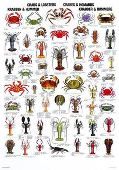 Crustaceans have bilateral symmetry and a hard crunchy exoskeleton. Because the crustacean grows and the exoskeleton does not, crustaceans h. Fish Chart, Crab And Lobster, Salt Water Fish, Kunst Poster, Poster Poster, Types Of Fish, Animal Posters, Ocean Creatures, Sea Fish