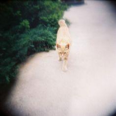 TORA CAT | Flickr - Photo Sharing!