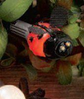 Bulb - Lady Bug