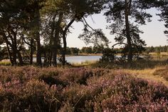 De wandeling (hanskosterwandelroutes), over een groot gedeelte van de Groote Heide, ook wel Leenderheide, dit is een natuurgebied van 333 hectare, gelegen op het grondgebied van de Nederlandse gemeenten Heeze-Leende en Geldrop-Mierlo. Het is in het bezit van Het Brabants Landschap.