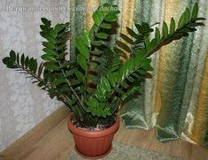 Как пересадить долларовое дерево Propagation, Cactus Plants, Indoor Plants, Sodas, Garden, Gardening, African, Cacti, Soda