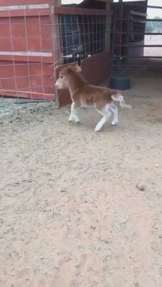 Funny Horse Videos, Funny Horse Pictures, Funny Horses, Baby Animals Pictures, Cute Animal Videos, Cute Animal Pictures, Rare Horses, Horse Photos, Cute Wild Animals