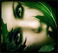 """'Sleepy Leaves"""""""