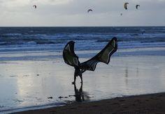 kite surf, oiseau, papillon, aile, plage, sport de glisse, mer, plage