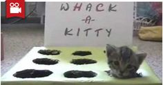 Whack-A-Kitty <3  Watch here: http://meowaum.com/4507-whack-a-kitty/