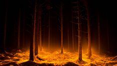 Desktop Wallpapers: Desktop Wallpapers: Glowing Orange Forest