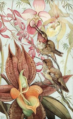Edward Julius Detmold ~ Vintage Book Illustration (Hummingbirds and Orchids) Art And Illustration, Vintage Illustrations, Vintage Botanical Illustration, Nature Illustrations, Vintage Abbildungen, Vintage Prints, Vintage Library, Vintage Books, Botanical Drawings