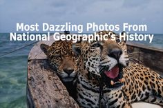 The 18 Most Dazzling Photos From National Geographic's History