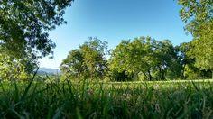 ¡¡¡Mañanas que dan gusto!!!  Tumbados en la hierba a la sombra de los árboles. Que paz 🙂