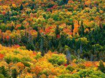 "Conde Nast Traveler included Michigan in their ""Ten Secret Fall Foliage Getaways"". Start exploring today!"