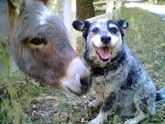 Google Image Result for http://images.fanpop.com/images/image_uploads/Donkey-Friends-donkeys-533577_640_480.jpg