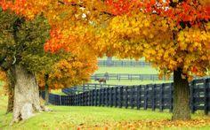 Albemarle county, VA horse farms are so beautiful, especially in the autumn! Fresco, Kentucky Horse Farms, Shelter, Horse Fencing, Horse Barns, Horse Stables, Desktop, Types Of Fences, Front Yard Fence